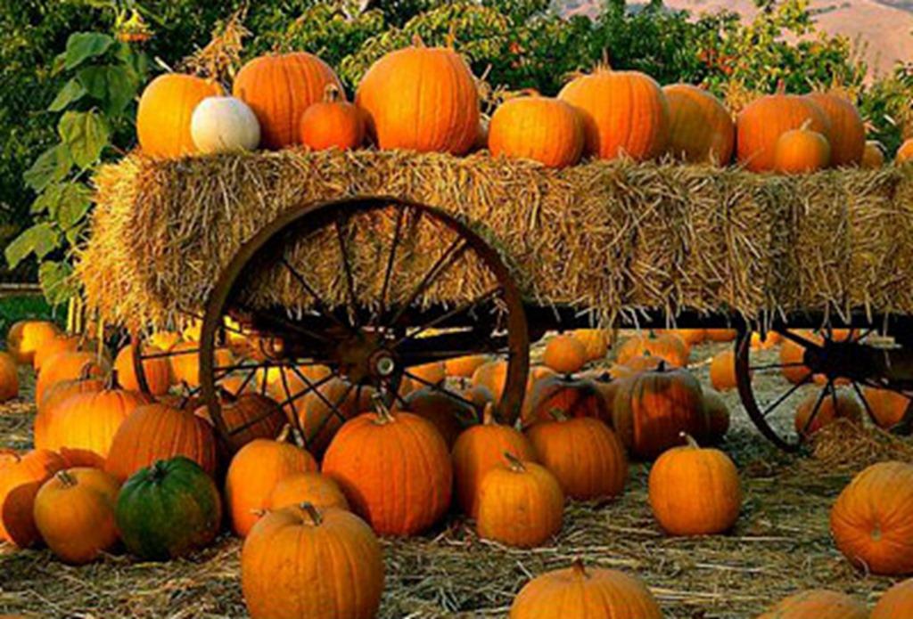 Pumpkin-Patch1